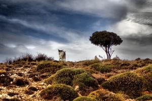Sierra de Cazorla den2.